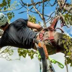 Tualatin-tree-service