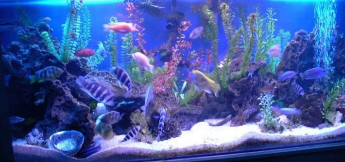 aquarium tanks for sale