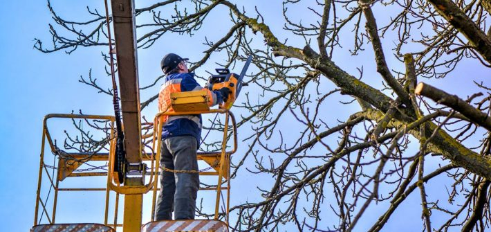 tree trimming service price