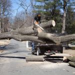 monster tree service columbus ohio