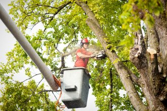 Tree Service Arborist Pruning, Trimming, Cutting Diseased Branches with Chainsaw